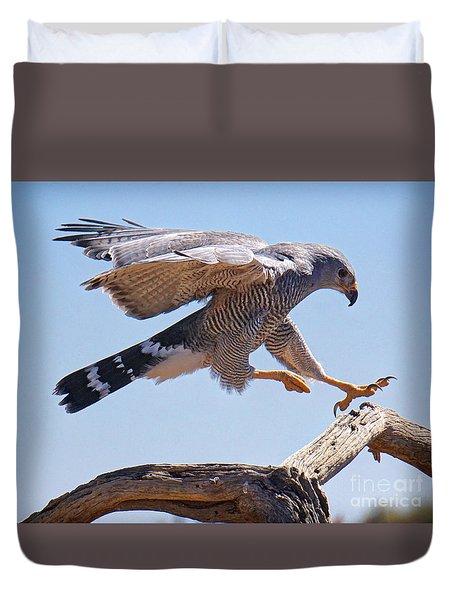 Grey Hawk Alights Duvet Cover