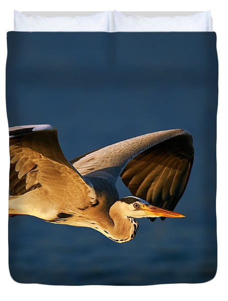 Grey Heron In Flight Duvet Cover