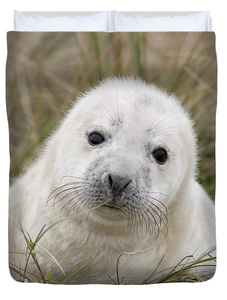 Grey Seal Pup Duvet Cover