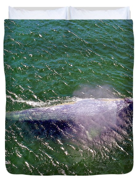 Grey Whale Duvet Cover