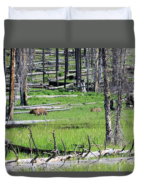Grizzly Bear And Cub Cross An Area Of Regenerating Forest Fire Duvet Cover by Louise Heusinkveld