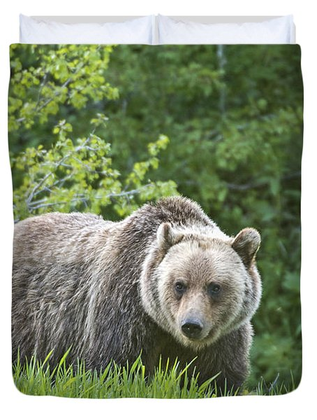 Grizzly Bear Duvet Cover