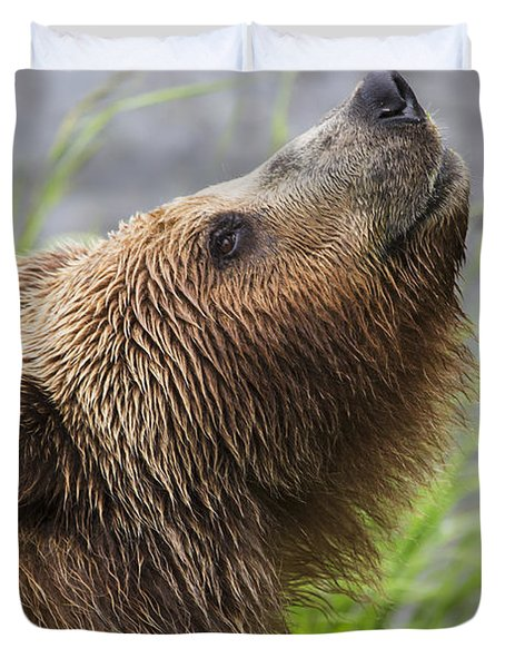 Grizzly Bear Sniffing Air While Fishing Duvet Cover by Lucas Payne