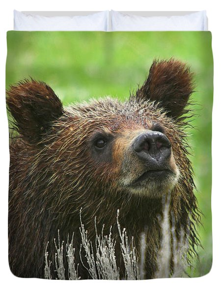 Duvet Cover featuring the photograph Grizzly Cub by Steve Stuller