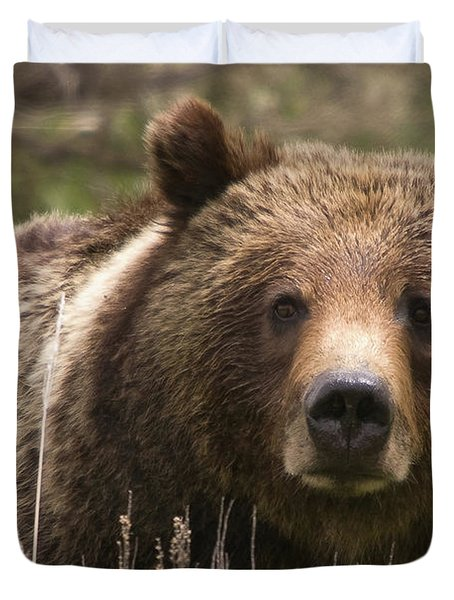 Grizzly Portrait Duvet Cover