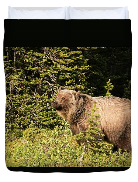 Grizzly Sow Duvet Cover