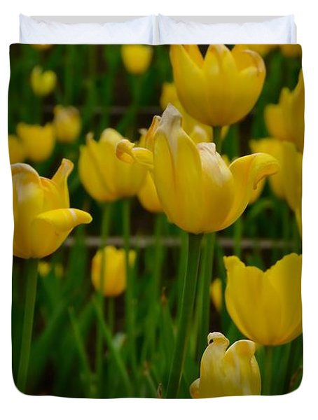 Grouping Of Yellow Tulips Duvet Cover