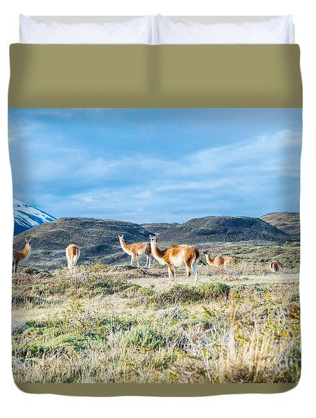 Guanaco In Patagonia Duvet Cover