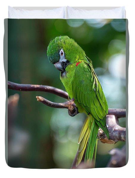 Hahn's Macaws Duvet Cover