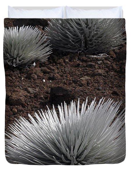 Haleakala Silverswords Duvet Cover