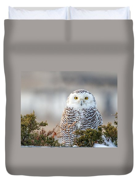Hampton Beach Nh Snowy Owl Duvet Cover