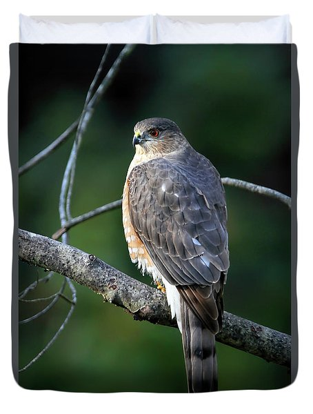 Handsome Sharp Shinned Hawk Duvet Cover