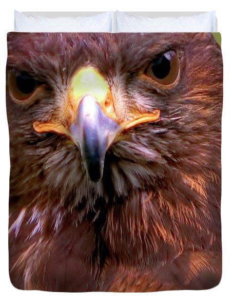 Harris Hawk Portriat Duvet Cover by Stephen Melia