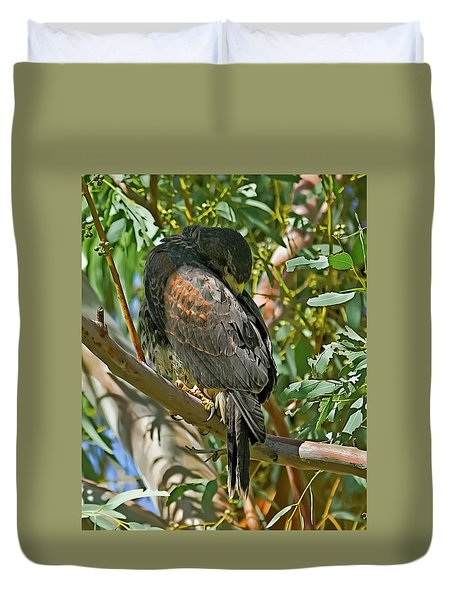Duvet Cover featuring the photograph Harris's Preening V09 by Mark Myhaver