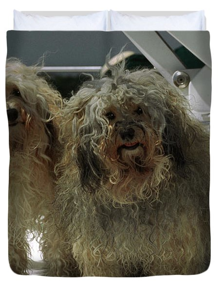 Havanese Dogs Duvet Cover by Sally Weigand