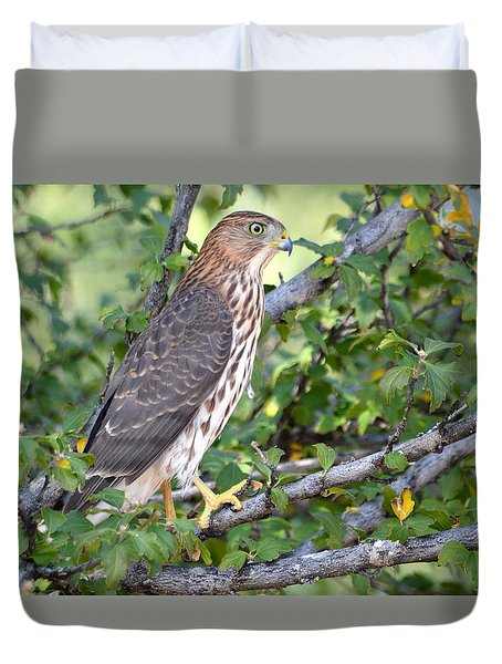 Hawk  Duvet Cover