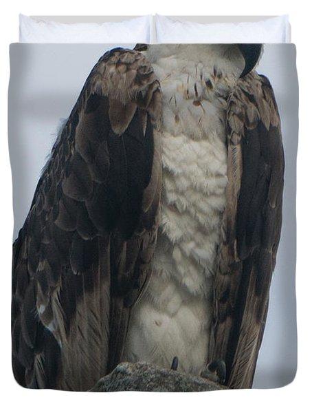 Hawk Facing Down Duvet Cover