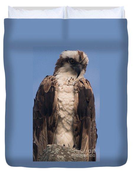 Hawk Glare Duvet Cover