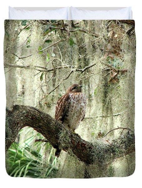 Hawk In Live Oak Hammock Duvet Cover