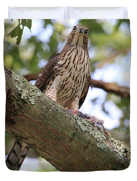 Hawk On A Branch Duvet Cover