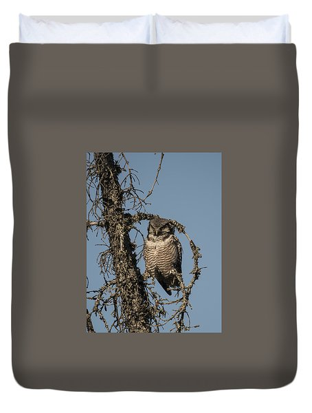 Hawk Owl Gaze Duvet Cover