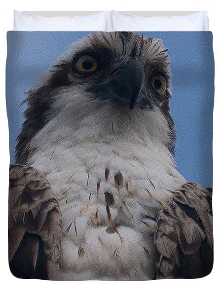 Hawk Stare Duvet Cover