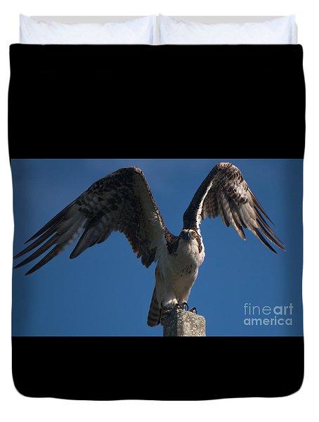 Hawk Wings Duvet Cover