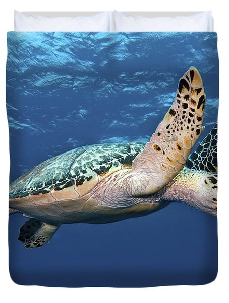 Duvet Cover featuring the photograph Hawksbill Sea Turtle In Mid-water by Karen Doody
