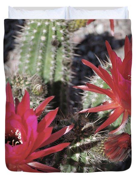 Hedgehog Cactus Duvet Cover by Donna Greene