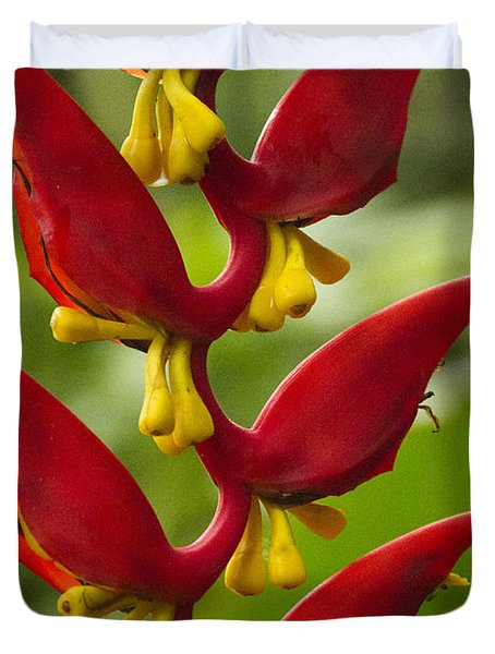 Heliconia Dielsiana Duvet Cover by Heiko Koehrer-Wagner