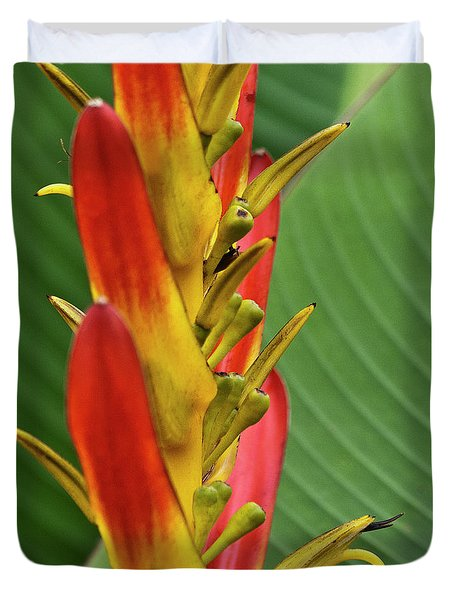 Heliconia Duvet Cover by Heiko Koehrer-Wagner