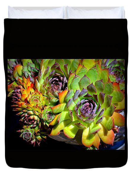 Hens 'n Chicks Duvet Cover by Lori Seaman