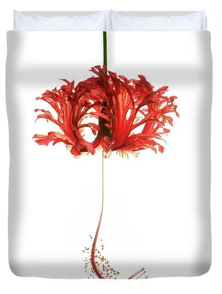 Hibiscus Schizopetalus On White Duvet Cover