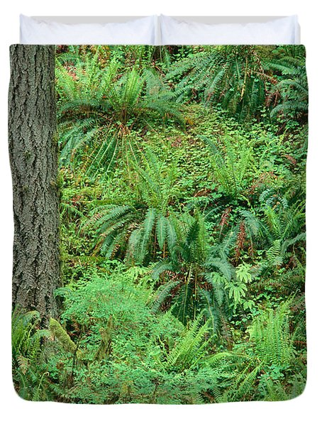Hillside Ferns Duvet Cover by Greg Vaughn - Printscapes