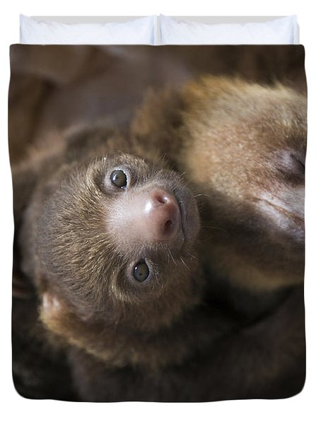 Hoffmanns Two-toed Sloth Orphans Hugging Duvet Cover by Suzi Eszterhas