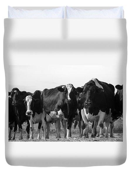 Curious Holsteins Duvet Cover