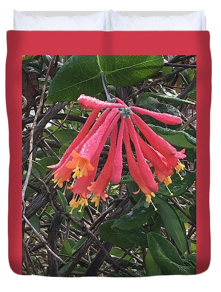 Honeysuckle Duvet Cover by Kay Gilley