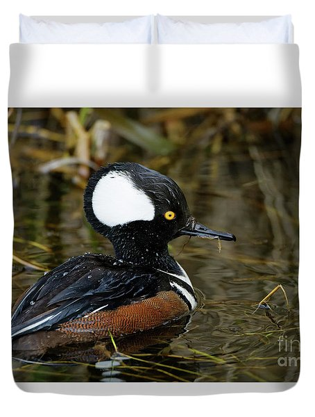 Hooded Merganser At Ease Duvet Cover