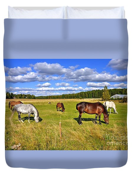 Horses On Pasture Photograph By Esko Lindell