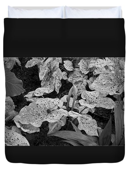 Hosta Bw - Pla363 Duvet Cover by G L Sarti