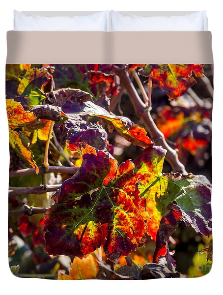 Hot Autumn Colors In The Vineyard 04 Duvet Cover