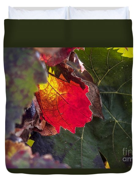 Hot Autumn Colors In The Vineyard Duvet Cover