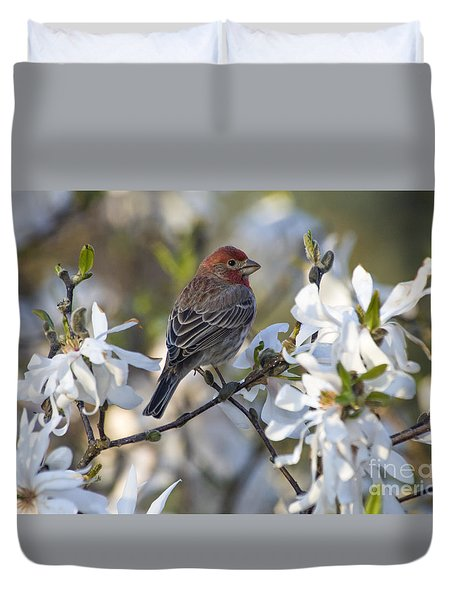 Duvet Cover featuring the photograph House Finch - D009905 by Daniel Dempster