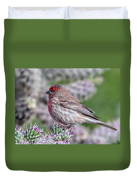 House Finch Male Duvet Cover