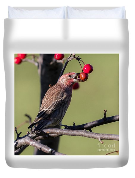 House Finch Vs Crabapple  Duvet Cover