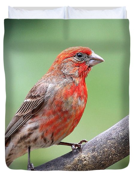 House Finch Duvet Cover by Wingsdomain Art and Photography