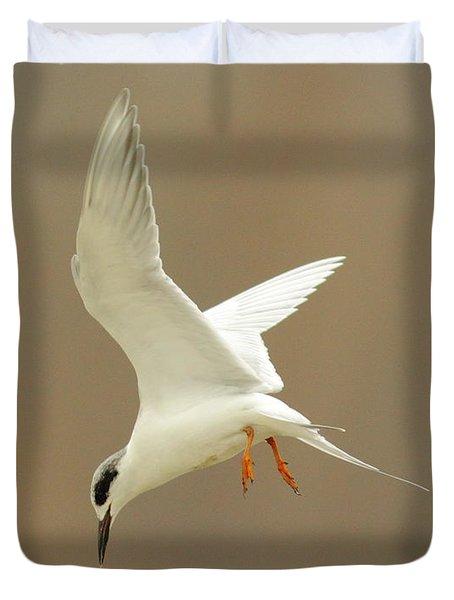 Hovering Tern Duvet Cover by Robert Frederick
