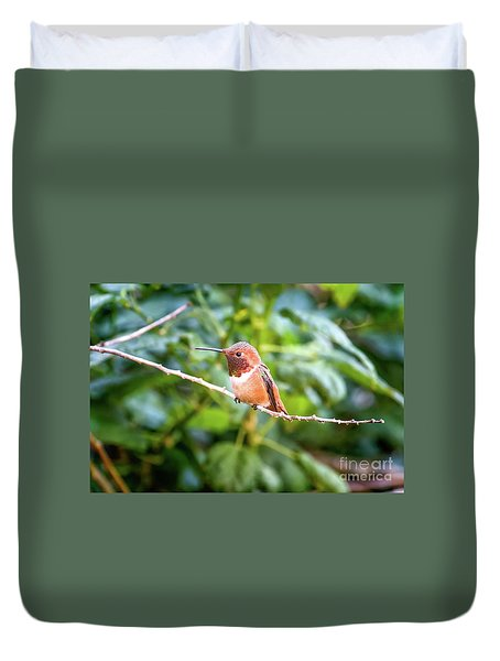 Humming Bird On Stick Duvet Cover by Stephanie Hayes