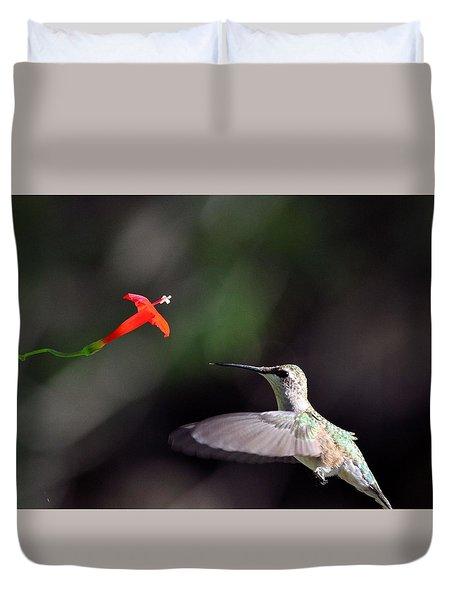 Hummingbird And Cardinal Climber Duvet Cover by Kathy Eickenberg