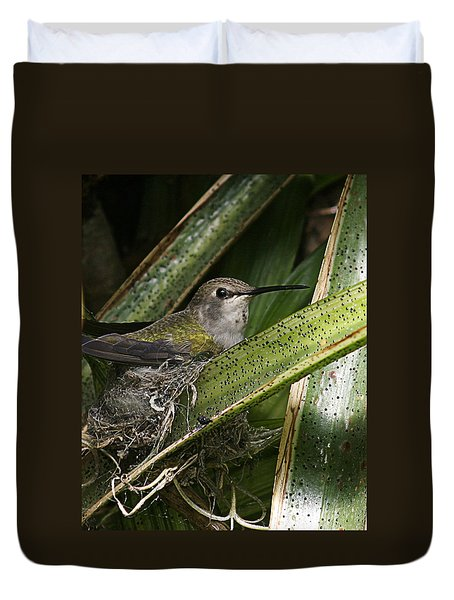 Nesting Anna's Hummingbird Duvet Cover